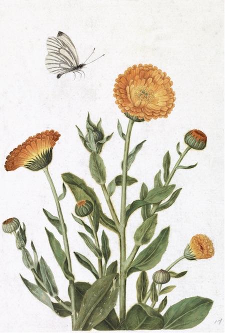 French Botanicals