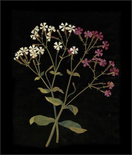 English Botanicals
