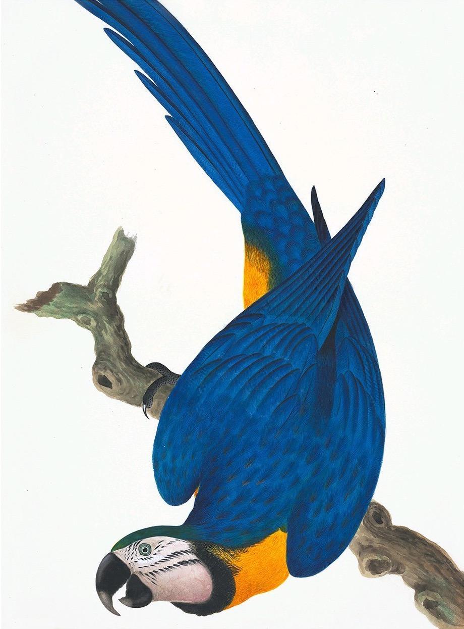 CHINESE BIRDS