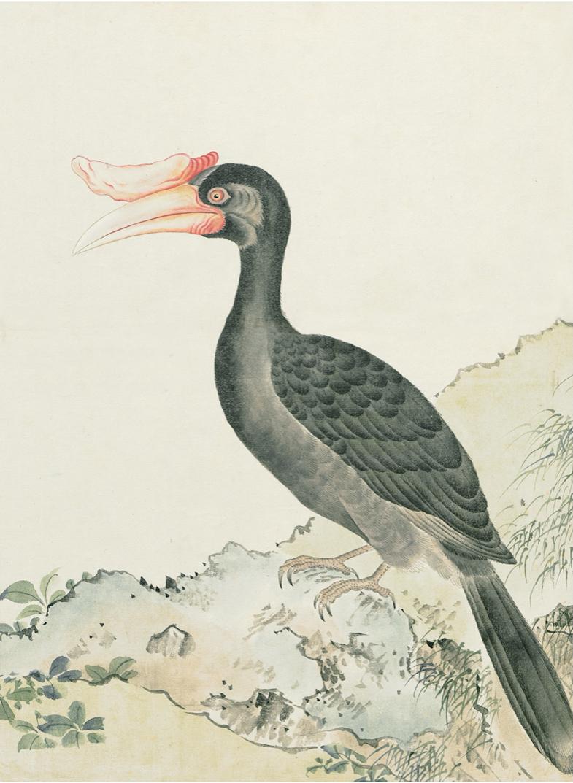 JAPANESE BIRDS