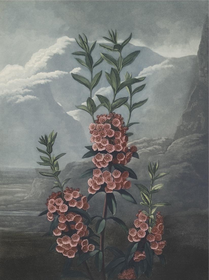 FLORA GARDEN
