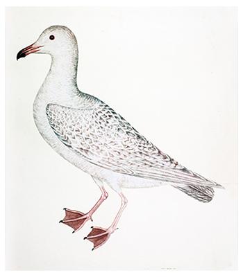 Swedish Aquatic Birds